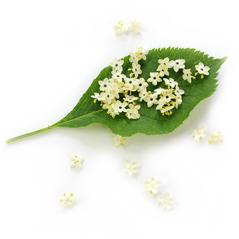 Elderberry flower extract image
