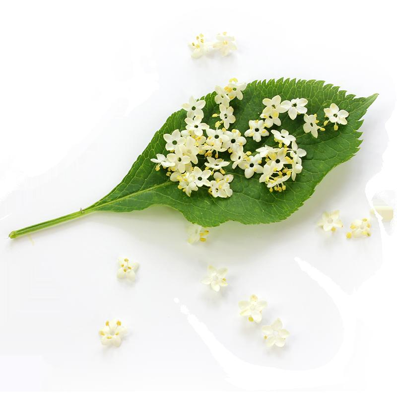 Elderberry flower extract image